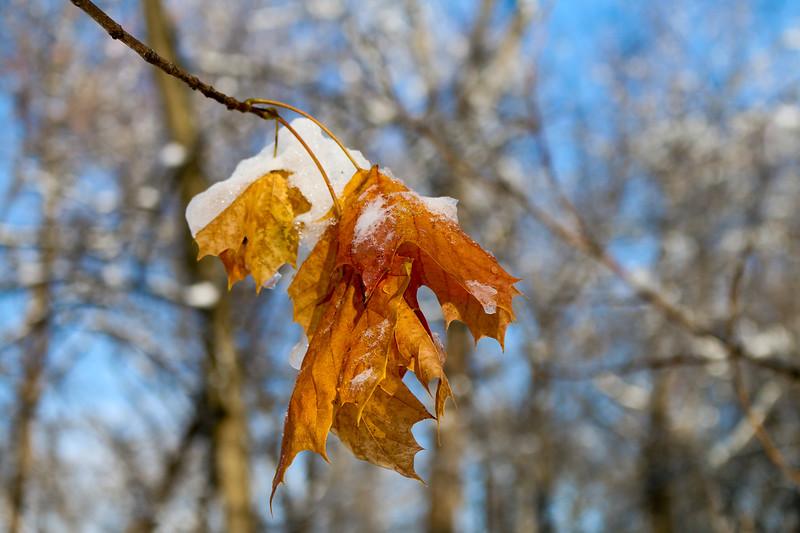 Autumn into Winter Horizontal