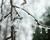 Morning light reveals the ice coating over all the trees and branches after a winter ice storm.  Reston, Virginia, USA.  © Rick Collier<br /> <br /> <br /> Reston Virginia USA winter ice storm branch icicle ice storm cold stark barren closeup