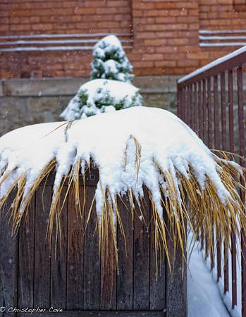 Winter Pot