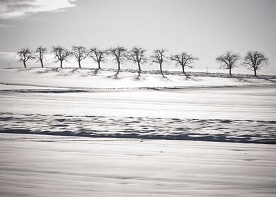 Schneefelder / Fields of snow