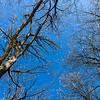 Bare trees, snow, blue sky.