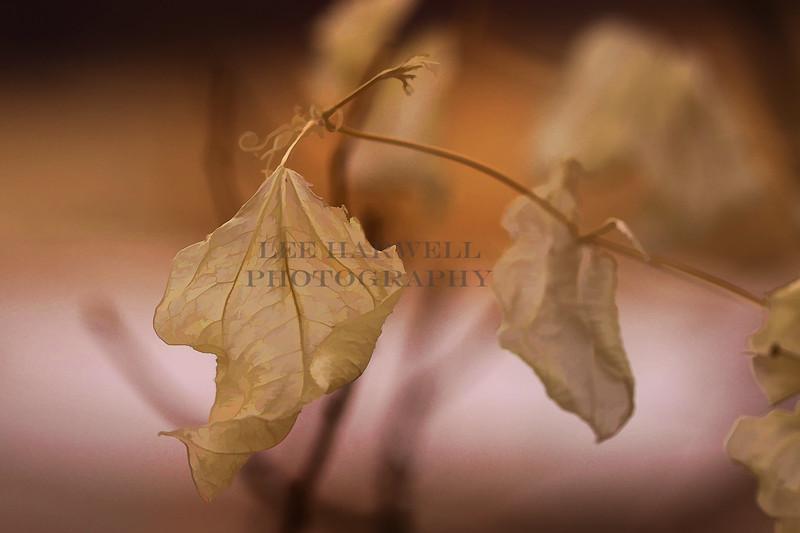 Leaf 's Last  Day.