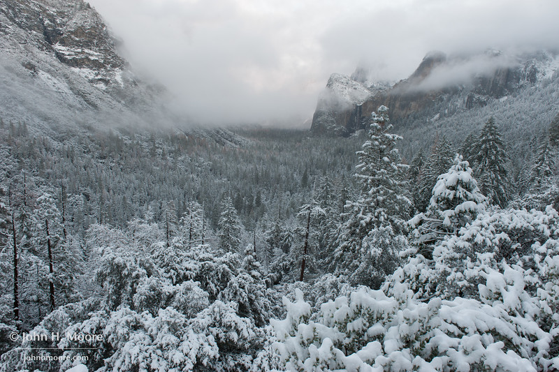 Snowy trees in Yosemite Valley as seen from Tunnel View.  Yosemite National Park.