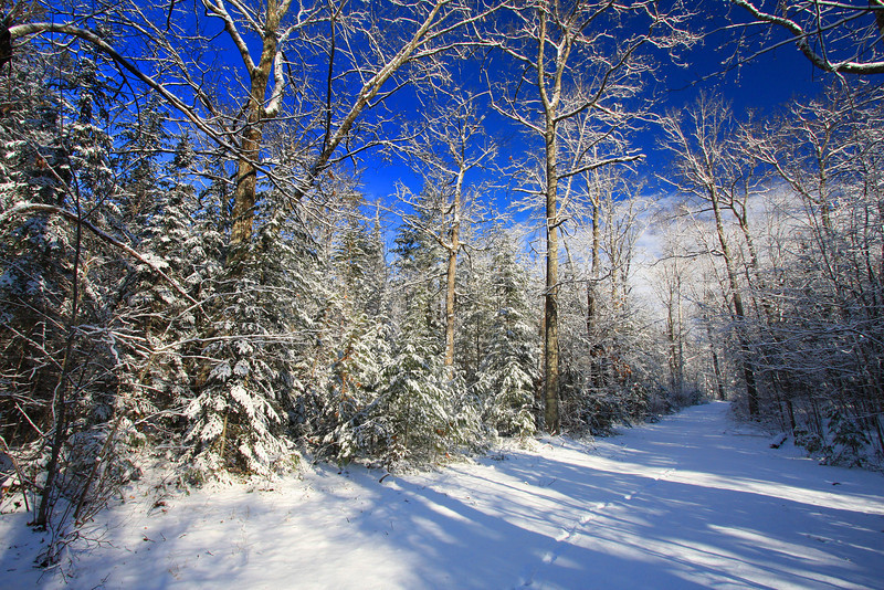 """""""Winter Comes to the Northwoods"""""""