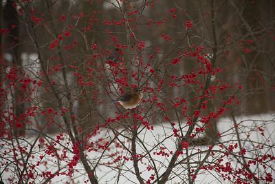 Winterberry2012