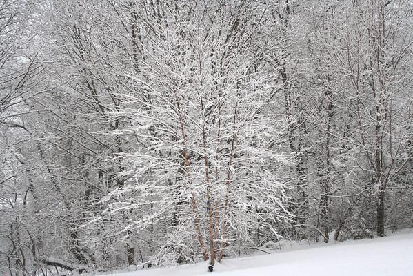 Winter's Beautfy