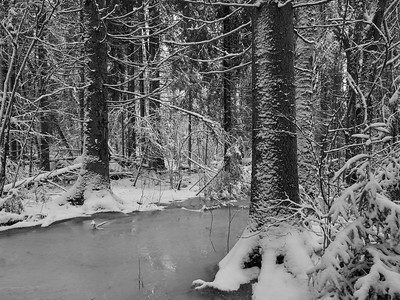 Frozen flooding  brook. Siuro bw