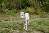 Wolf_005