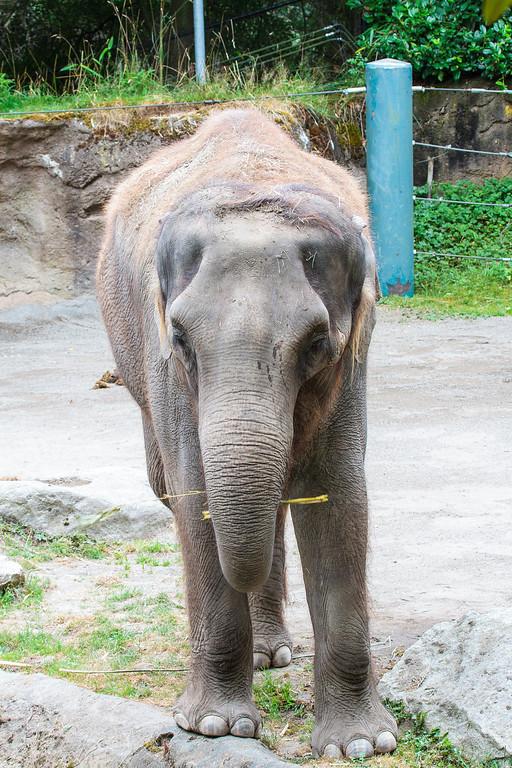 Zoo_072813_3342