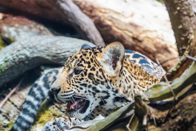 Zoo_072813_3376