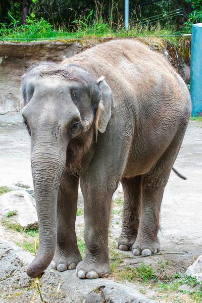 Zoo_072813_3341