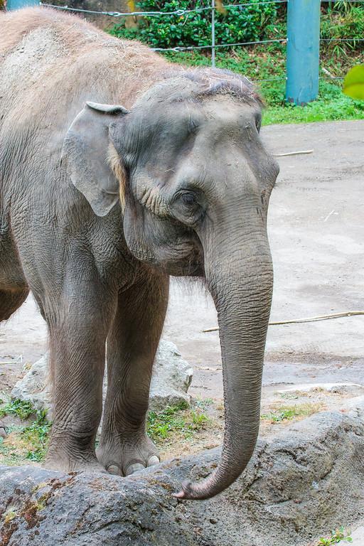 Zoo_072813_3343