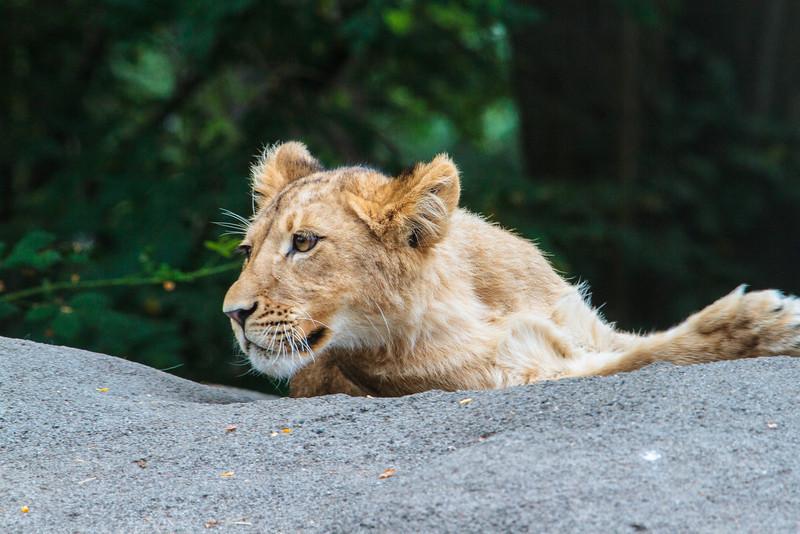 Zoo_072813_3302
