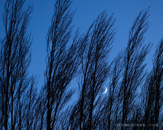 Moon behind trees