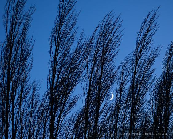 Moon behind trees