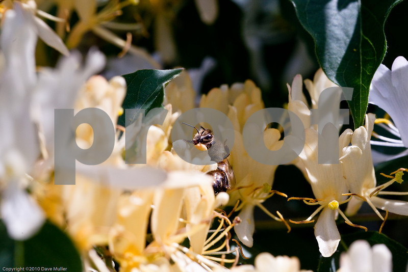 Woodward_Park_20100423_0061