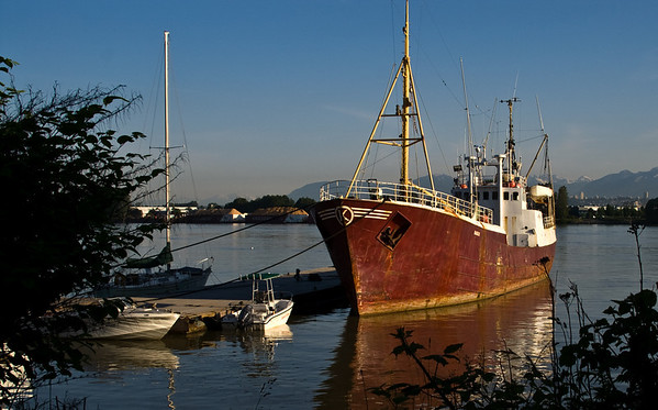 Old freighter on the Fraser River in Delta