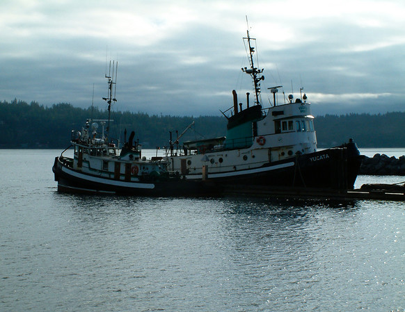 Coastal tug boats at the dock in Campbell River on a gray morning.
