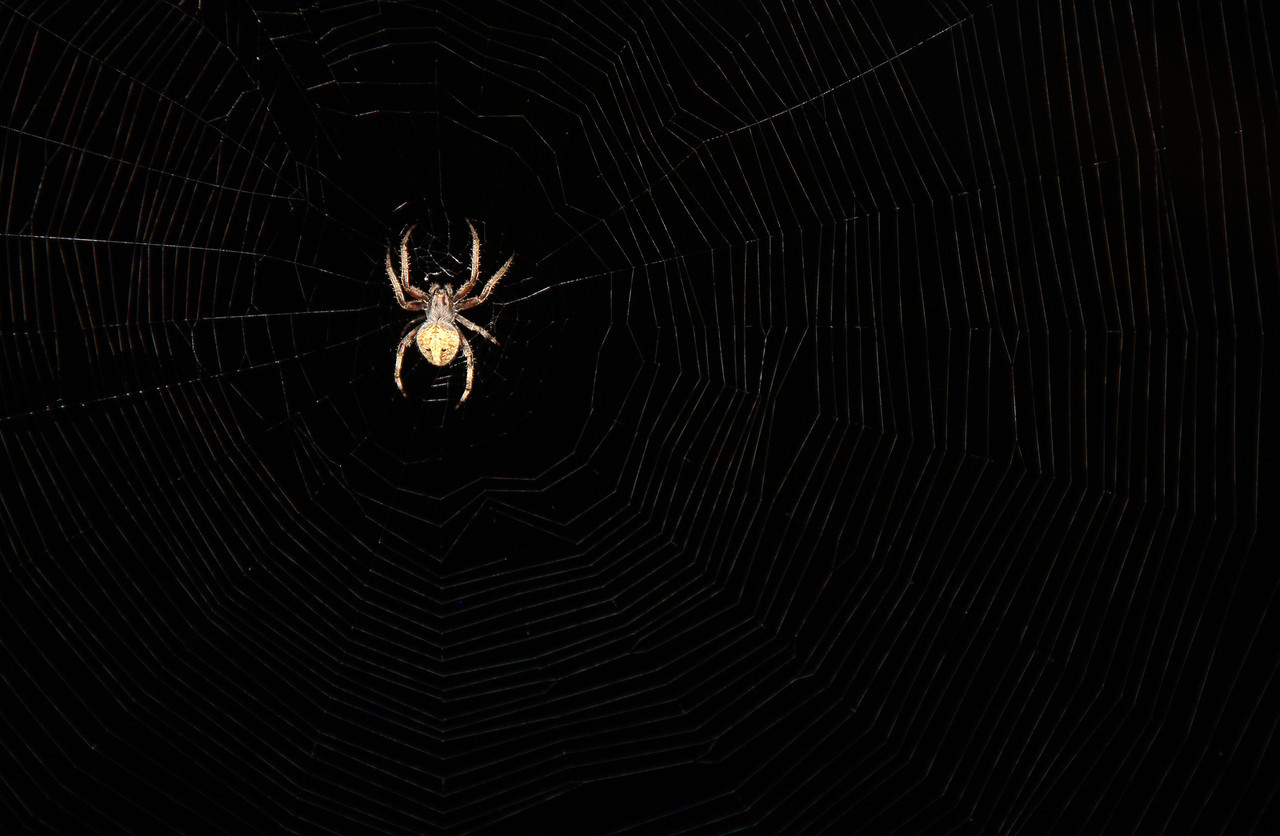 Night Light Spider