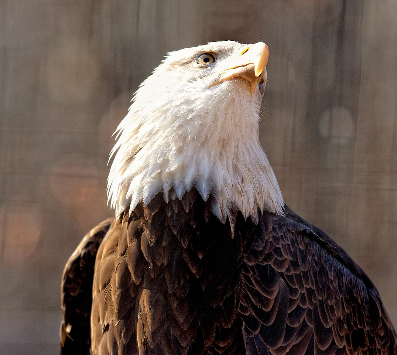 World Bird Sanctuary, December, 2011