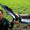 Jamie with the Bateleur Eagle