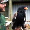Tarrant the keeper holding the Bateleur Eagle