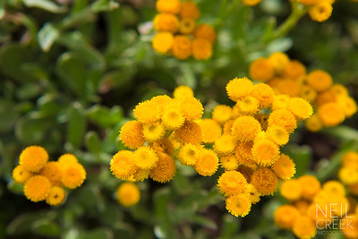 Yallaroo Gardens - 141123