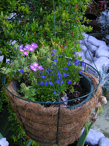 Hanging baskets: Good. Dogs can't tromple them or knock them over.