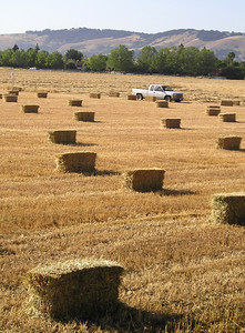 For those who prefer to get up close and personal with their hay bales.