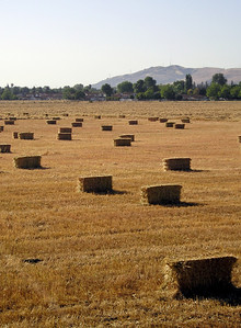 There must be a poem about hay bales somewhere. ...Wow, OK, you can take your pick from among many hay poems of the late 20th century!