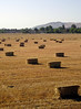 "There must be a poem about hay bales somewhere. ...Wow, OK, you can take your pick from among many <a href=""http://www.hayinart.com/001411.html"">hay poems of the late 20th century</a>!"