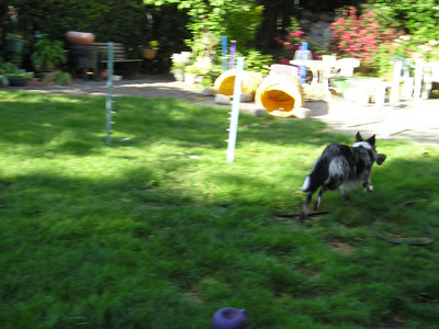 Whoa--Boost and her favorite toy start dashing madly around the yard! She never does this when I'm out here! If only I had a real camera!