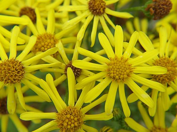 yellowfingers