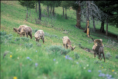 Yellowstone2003_05