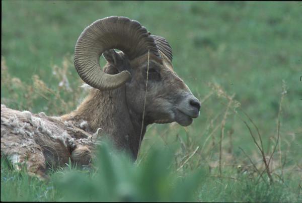 Yellowstone 2002