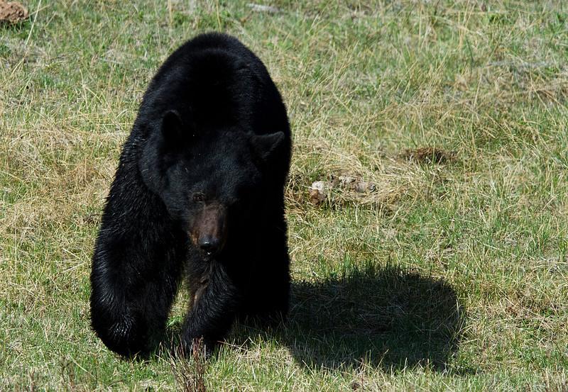 Yellowstone 2012 Trip