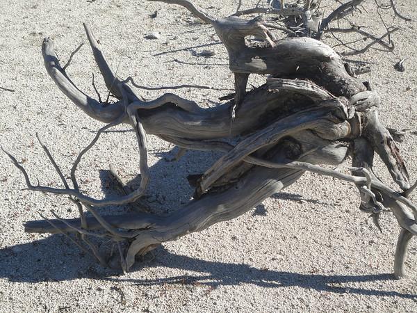 dead tree in Biscuit Basin