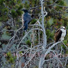 Raven and Osprey share a moment