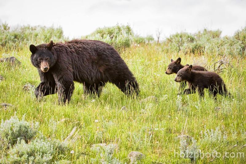 IMAGE: https://photos.smugmug.com/Nature/Yellowstone-2015/i-RL2Hs7j/0/L/13653307_10208606367171289_6438764480076892519_o-L.jpg