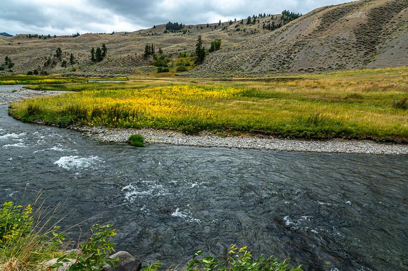Yellowstone Fall colors 7-11-19_V9A7320