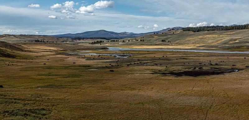 Yellowstone River Buffalo 9-19-19_V9A7613