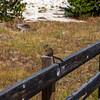 West Thumb Geyser Basin-Yellowstone National Park 8-2020_V9A8861