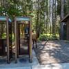 Elk-Yellowstone National Park 8-27-2020_V9A8853
