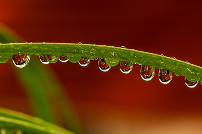 Water Droplets when it rains_2261