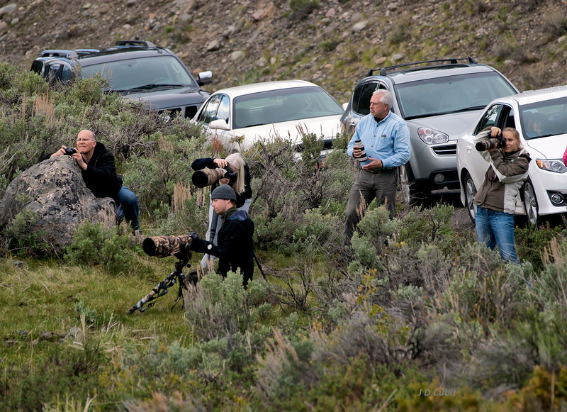 Photographers and a lens tender flocking to the bighorn sheep.