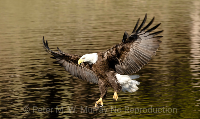 A bird in flight is a pretty sight.