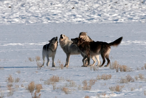 Yellowstone - March 2010