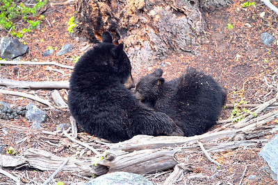 Mama nursing her baby