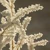 Detail of Hoar Frost on grass.