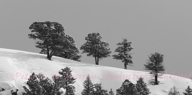 Landscape  on the ridge.